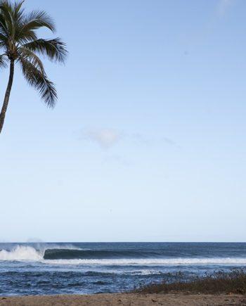 """Palm Shores"" Surf Art by EDA Surf."