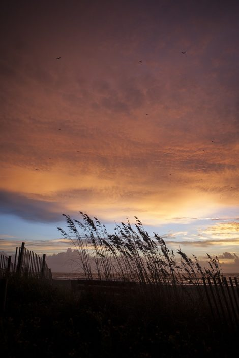 """Sea Breeze"" Coastal Art by EDA Surf."