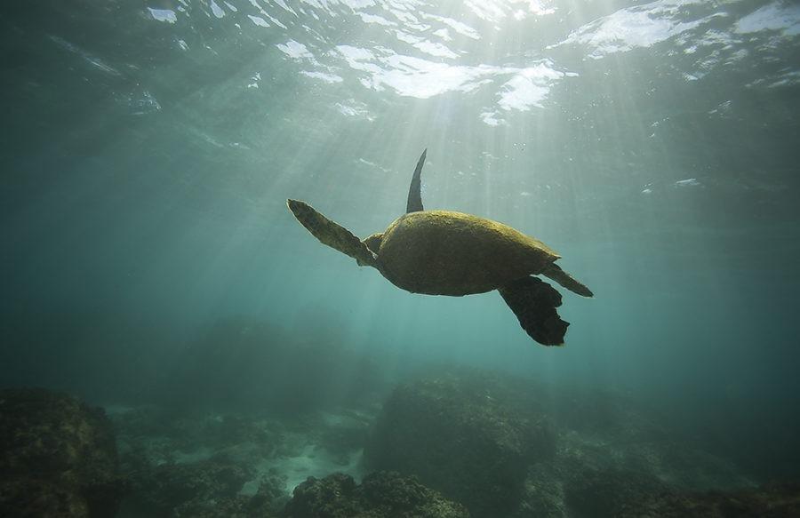 """Sea Turtle Escape"" Sea Life Art by EDA Surf"