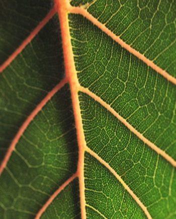 """Life Line"" Tropical Leaf by EDA Surf."