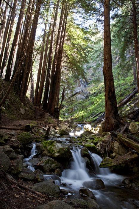 """""""Sierra Streams"""" Waterfall Art by EDA Surf"""