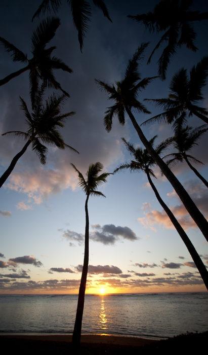 "Tropical Bliss"" Coastal Art by EDA Surf"
