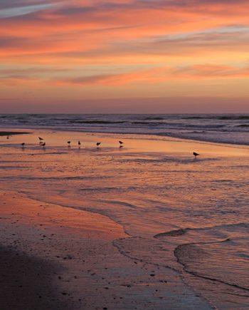 """Birds Of Dawn"" Sunset Art by EDA Surf."