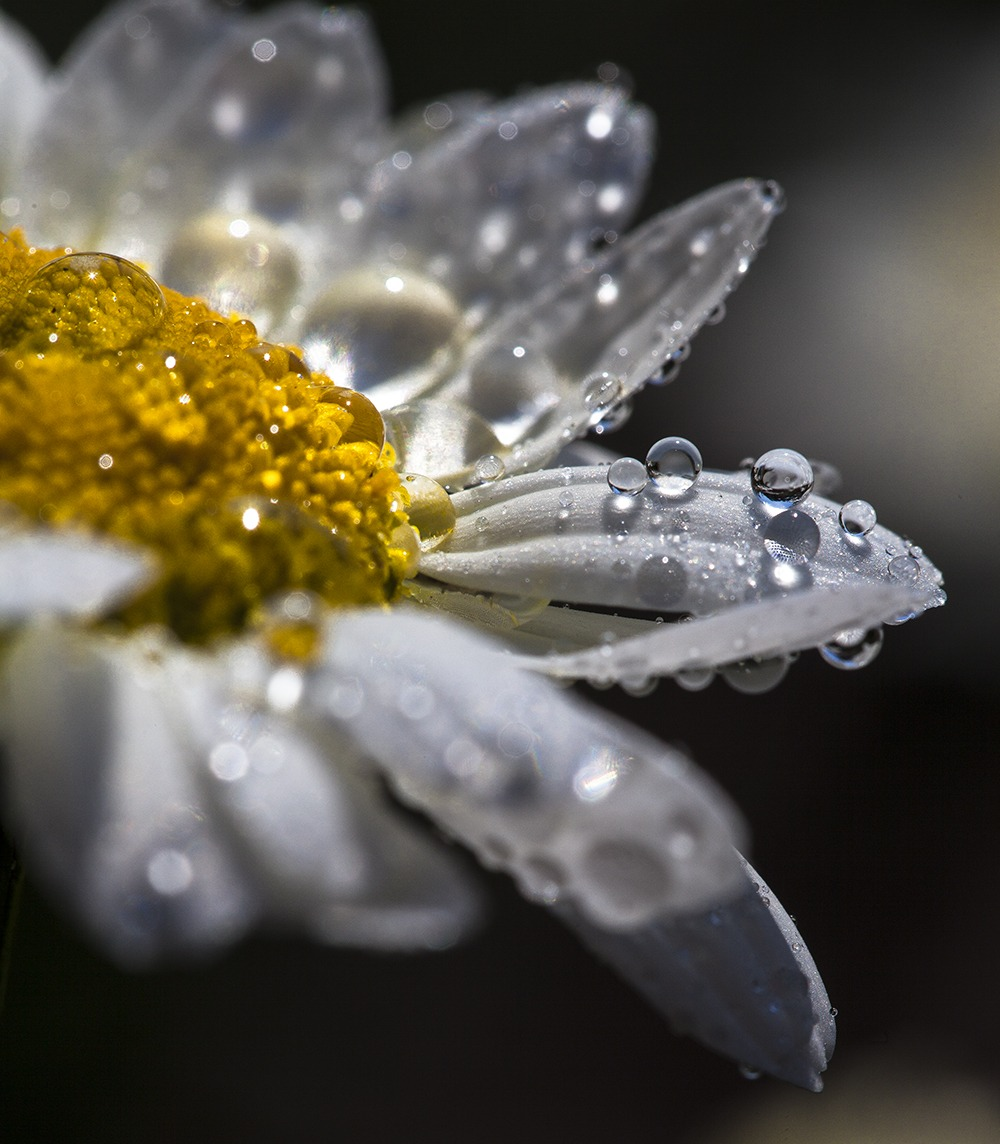"""Spring Rain"" Floral Art by EDA Surf"