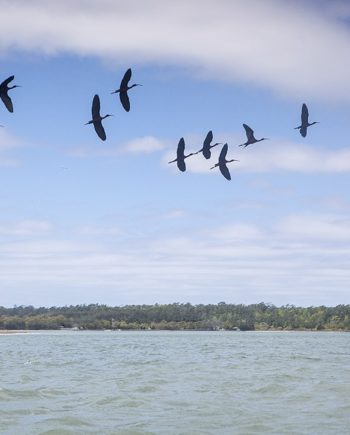 birds of a feather coastal art