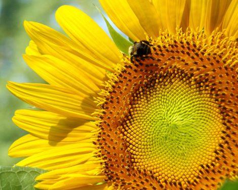 """Sun Buzz"" Floral Art by EDA Surf"