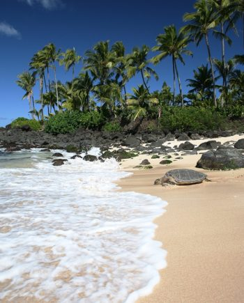 """Tropical Life"" Beach Art by EDA Surf"