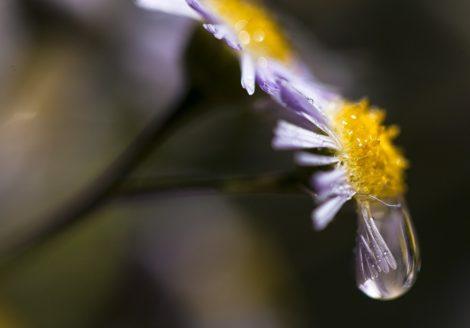 """Morning Drip"" Floral Art"