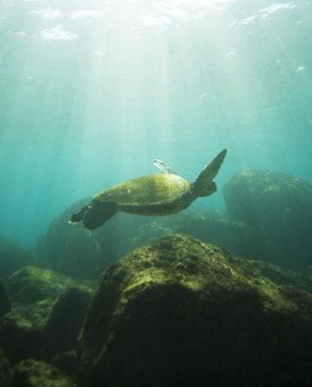 """Water World"" Sea Life Art by EDA Surf"