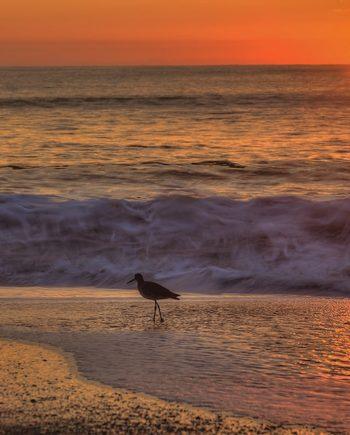 morning walk coastal art