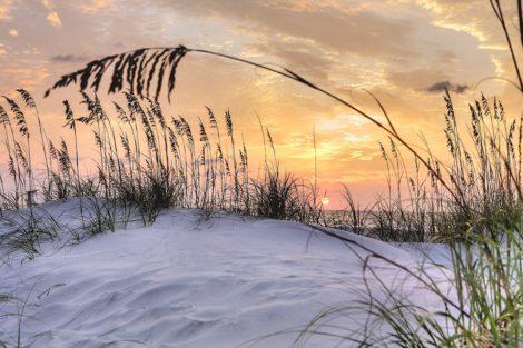 carolina sun coastal art
