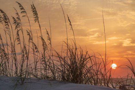 sea grass coastal art
