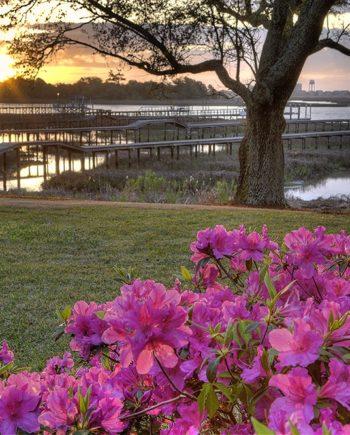 Azalea Sunrise Art