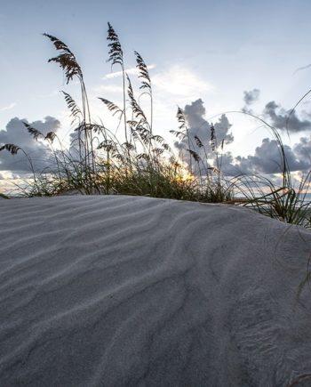 morning in the dune coastal art