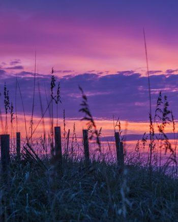 """""""Purple Dawn"""" Coastal Art by EDA Surf"""