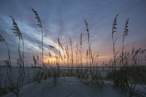 that one morning coastal art