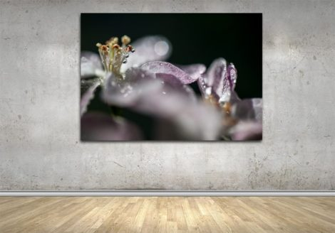 362_Apple_Blooms_WALL