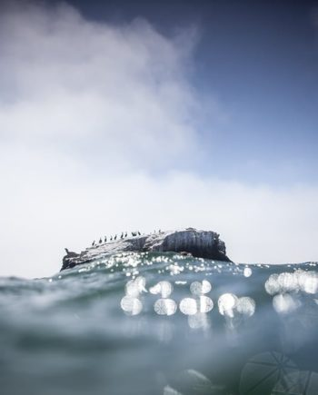 """A Seal's Rock"" Water Art photography"
