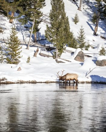mountain springs yellowstone national park photography