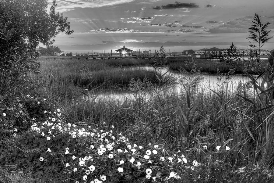 Sunbeams in the Marsh Black and White Photography